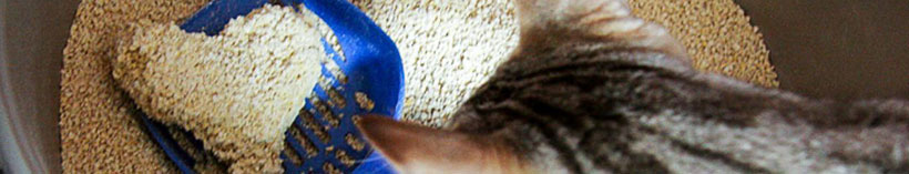 Safe and Hygienic Bentonite cat litter